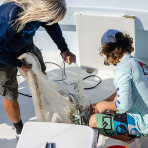 Captain Dave and Dallas emptied the net into the livewell, keeping an eye out for jelly fish. Photo by Rachel Dubrovin.