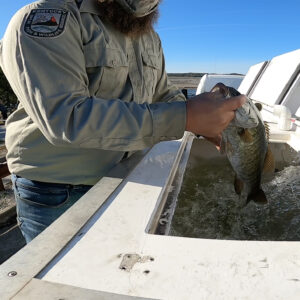 The Kentucky Department of Fish and Wildlife brought their live release tank to the event. Photo by Danelle Roy.