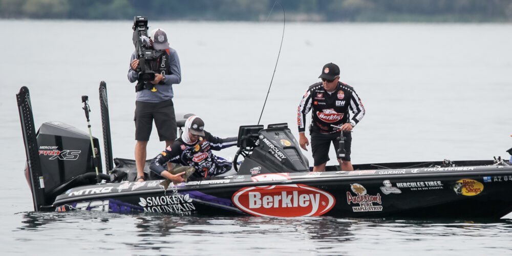 Image for Bertrand Continues to Expand Jerkbait Diversity