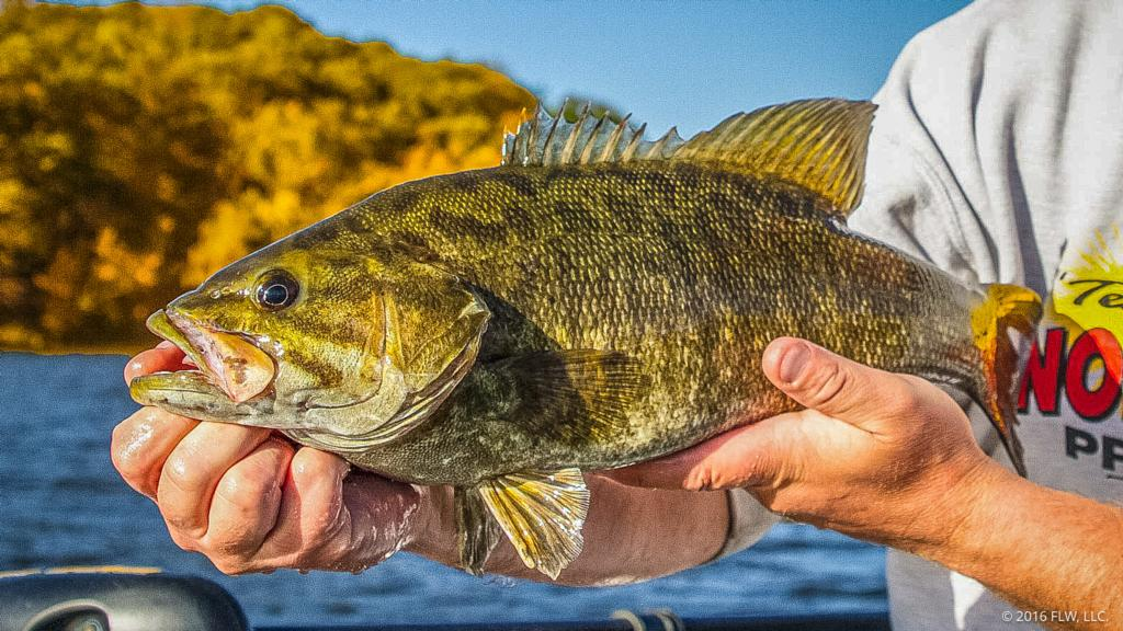 Image for Chasing Challenging Tennessee Smallmouths
