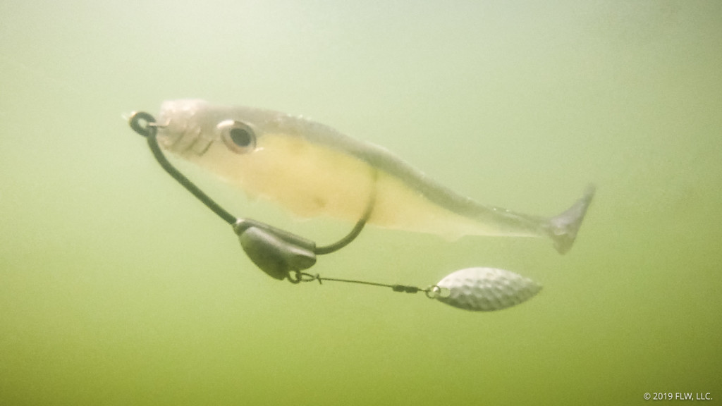 Image for When to Fish the Flashy Swimmer
