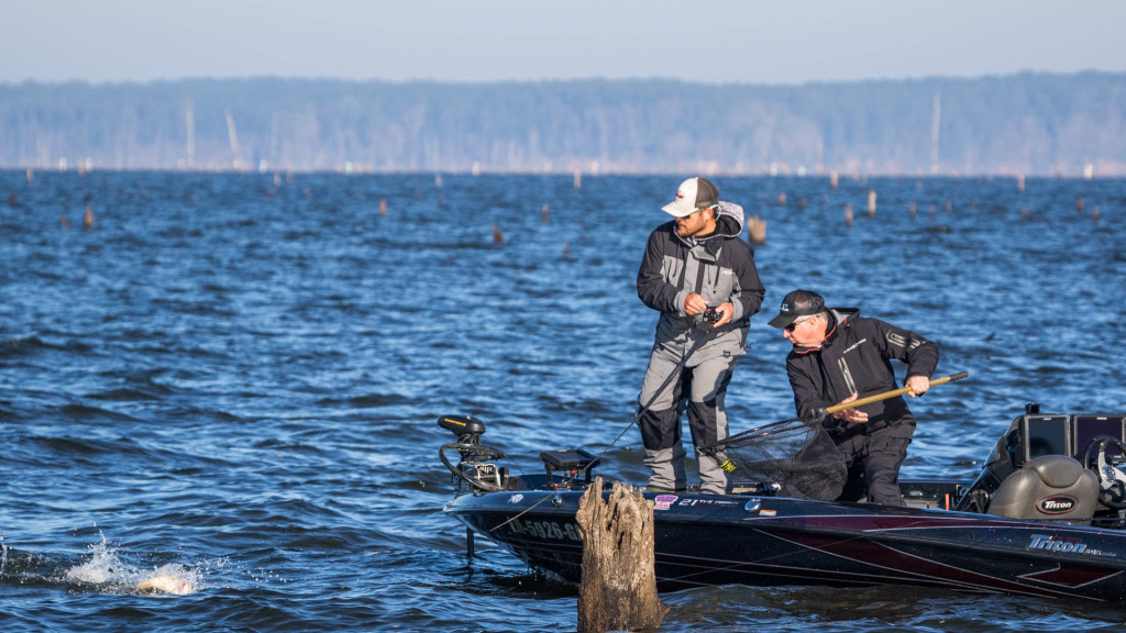 Image for Top 10 Patterns from Toledo Bend