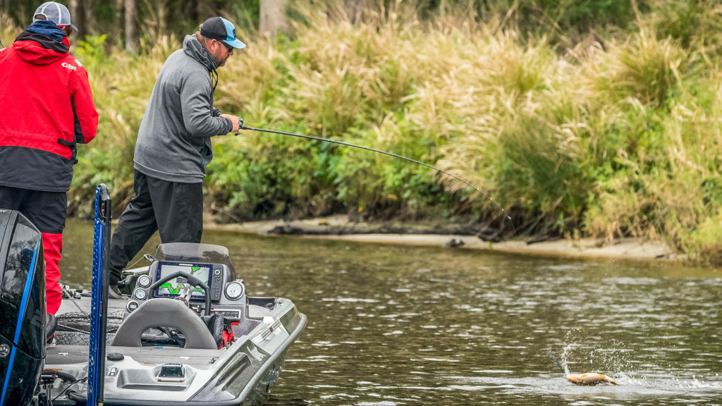 Image for Top 5 Patterns from the St. Johns River – Day 2